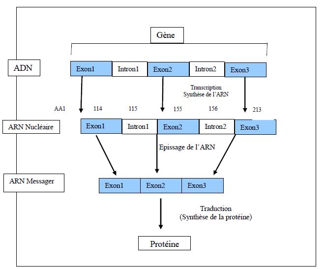 Diagrame VHL